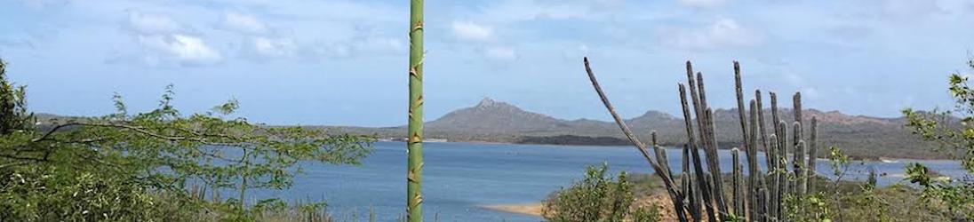 Auke van der Berg ~ Ikki's eiland. De horzel van het koninkrijk